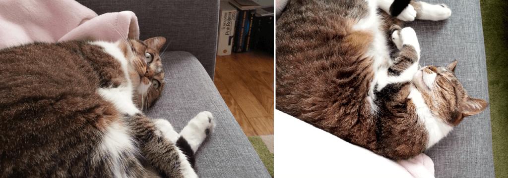 En transition, je vous mets des photos de mon chat