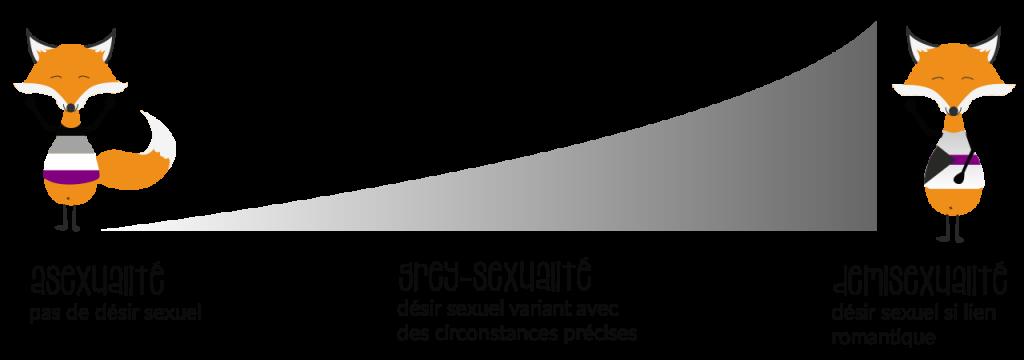 Le spectre des grey-sexualités